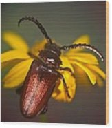 Horned Beetle Wood Print