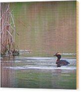 Horned Grebe Wood Print