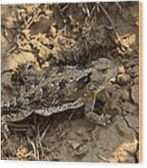 Horned Lizard   #8888 Wood Print