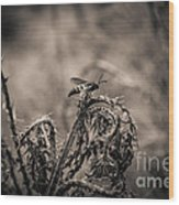 Hornet And Thorn - B Wood Print