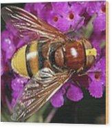 Hornet Mimic Hoverfly Wood Print