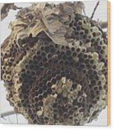 Hornet's Nest Wood Print by Todd Sherlock