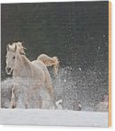 Horse 3 Wood Print