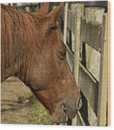 Horse 31 Wood Print