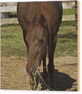 Horse 32 Wood Print
