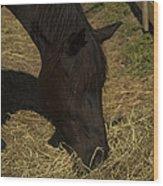 Horse 34 Wood Print