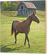 Horse And Old Barn In Etowah Wood Print