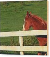 Horse And White Fence Wood Print