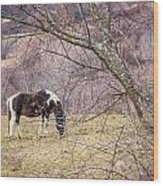 Horse And Winter Berries Wood Print