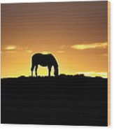 Horse At Sunrise Wood Print