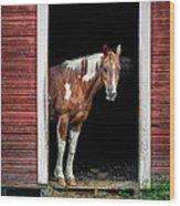 Horse - Barn Door Wood Print