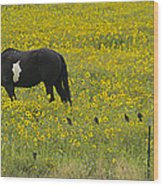 Horse  Birds  And Flowers   #8520 Wood Print