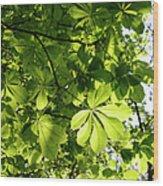 Horse Chestnut Leaves Wood Print