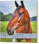 Horse Closeup Wood Print