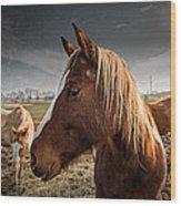 Horse Composition Wood Print