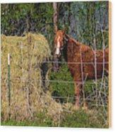 Horse Eating Hay In Eastern Texas Wood Print