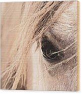 Horses Soul Wood Print