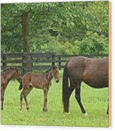 Horse Family Wood Print