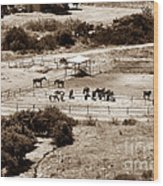 Horse Farm At Kourion Wood Print