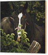 Horse Fence Wood Print