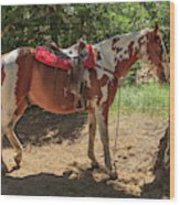 Horse For Rent South Lake Tahoe Wood Print
