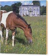 Horse Grazes Near St. Clarens Wood Print