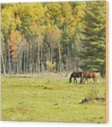 Horse Grazing In Field Autumn Maine Wood Print