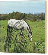 Horse Grazing In Field Wood Print
