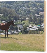 Horse Hill Mill Valley California 5d22663 Wood Print