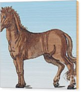 Horse Historiae Animalium  Wood Print