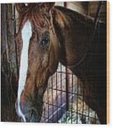 Horse In A Box Stall - Horse Stable Wood Print