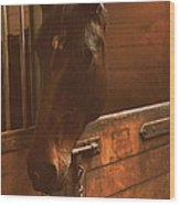 Horse In A Stable Wood Print