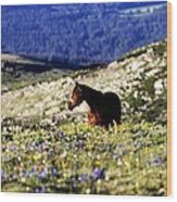 Horse In Mountain Wildflowers Wood Print by Rebecca Adams