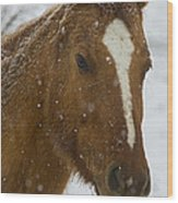 Horse In Snow   #4651 Wood Print