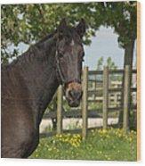 Horse In Spring Wood Print