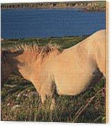 Horse In Wildflower Landscape Wood Print