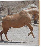 Horse Jumping Wood Print