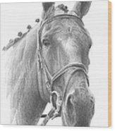 Horse Knotted Mane Pencil Portrait Wood Print