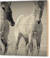 Horse Mysteries.. Wood Print