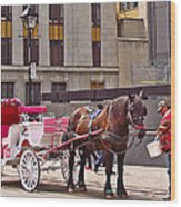 Horse Needs Water In Old Montreal-quebec-canada Wood Print
