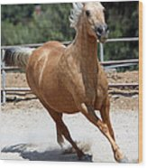 Horse On The Run Wood Print