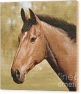 Horse Portrait II Wood Print by John Silver