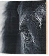 Horse Reflection Wood Print