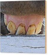 Horse Smile Wood Print