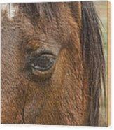 Horse Tear Wood Print