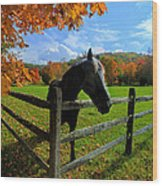 Horse Under Tree By Fence Wood Print by Dan Friend