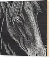 Horse Up Close Wood Print
