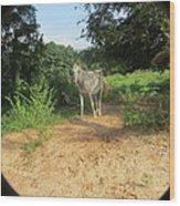 Horse Walks Toward Camera Wood Print