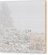 Horse With Winter Season Snow And Fog Wood Print