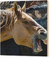 Horse Yawn Wood Print
